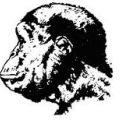 Portrait de Australopithecus africanus