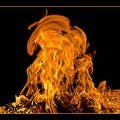 Portrait de flaming